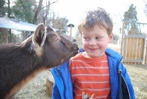 noah goat